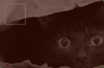 Покупаете бизнес, но не хотите покупать «кота в мешке»?